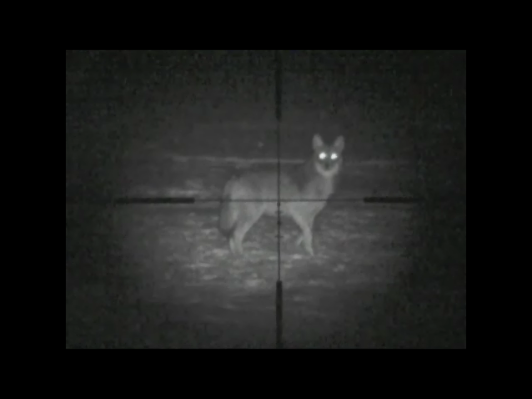 night vision coyote hunting